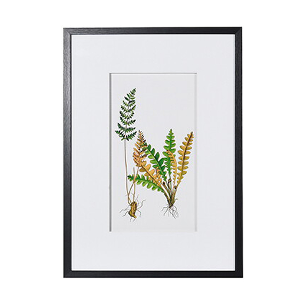 Shuttlecock Fern Floral Picture