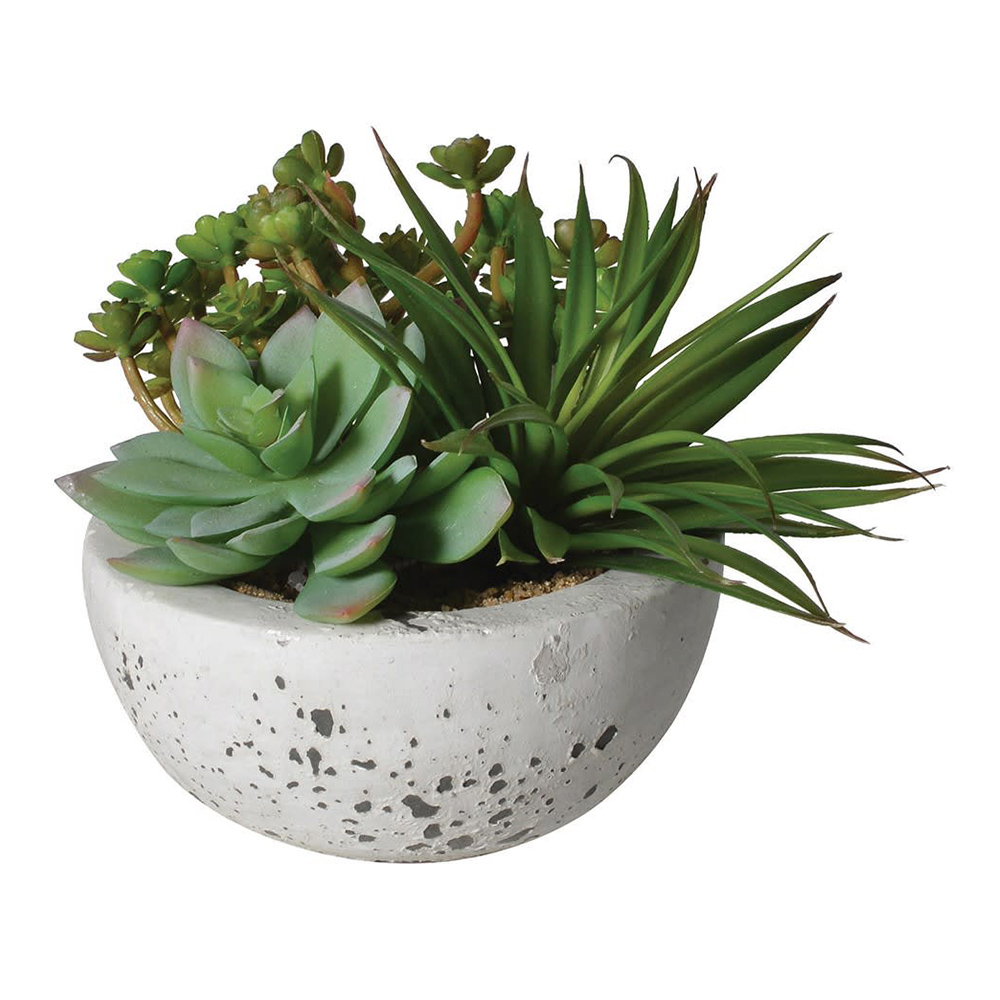 Green Succulents In Cement Bowl