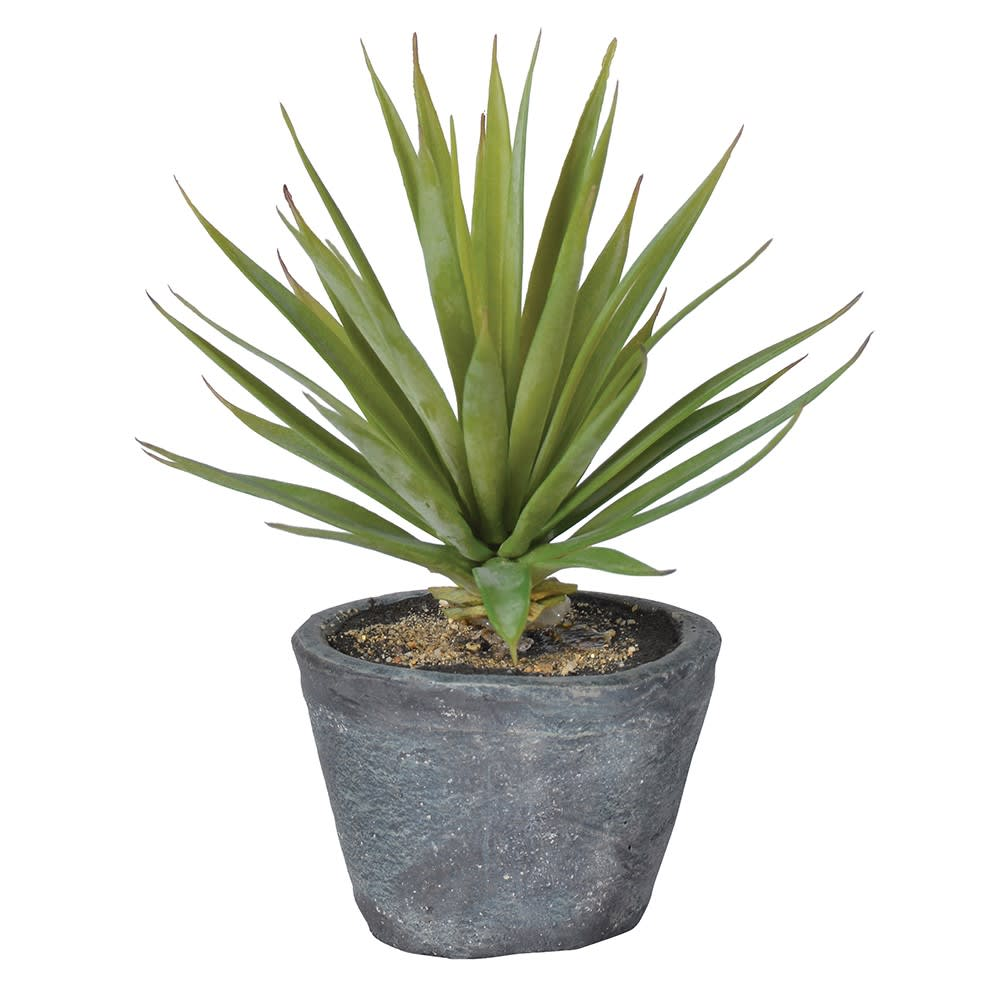 Green Spikey Airplant in Cement Pot