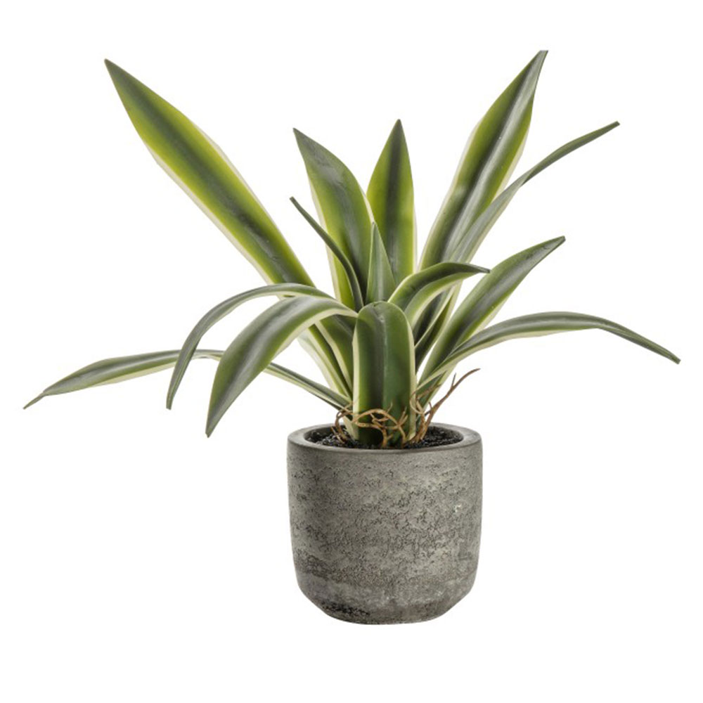 Faux Potted Agave with Roots