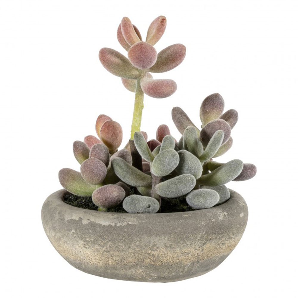 Large Faux Graptoveria with Cement Bowl